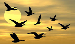 Image result for εικόνες πουλιά