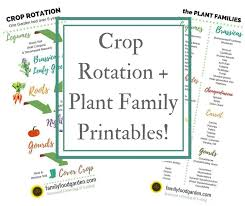 Crop Rotation Chart Crop Rotation Examples And Plant Families Family Food Garden