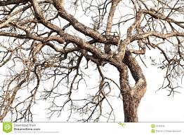 Tree twigs with bare trunks and branches