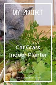 diy cat grass planter four paws report