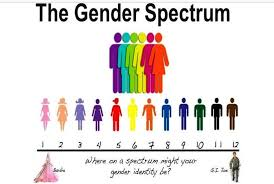 Different Genders Chart How Parents Are Being Shut Out Of The Transgender Debate