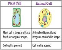 Plant And Animal Cell Worksheets