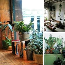 Decorating With Houseplants Ideas