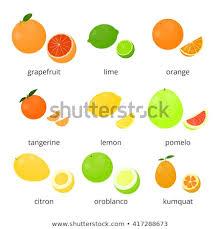orange fruit names.  Names Bright Cartoon Citrus Fruits With Names Isolated On White Background  Grapefruit Lime Orange In Orange Fruit Names I