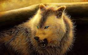 Angry Wolf Wallpapers 4K - Wolf ...