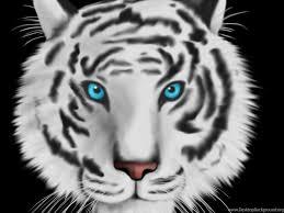black tiger with blue eyes wallpaper. Brilliant Tiger Fullscreen With Black Tiger Blue Eyes Wallpaper