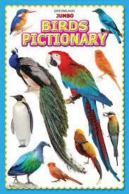 Birds Chart For Kindergarten Jumbo Birds Pictionary