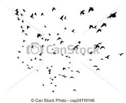 birds flying in the sky silhouette. Delighful Birds Many Birds Flying In The Sky  Csp24119146 On Birds Flying In The Sky Silhouette B