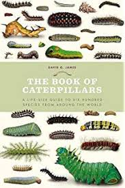Colour Identification Guide To Caterpillars Of The British