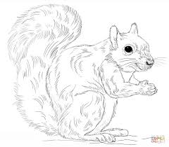 Small Picture Squirrels coloring pages Free Coloring Pages