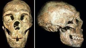 El neandertal cojo, sordo y manco que llegó a viejo por «compasión»