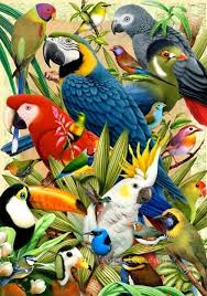 parrot types birds oil paintings