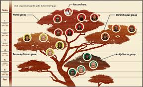 Human Family Tree Chart The Human Family Tree Post 16 Rlwolfblog