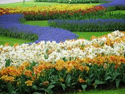 photo essay keukenhof the world s largest flower garden i