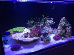 orphek client in the uk has updated his tank status and graciously shared more photos of his new build using our atlantik led reef pendants