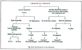69 Logical Gram Positive Bacteria Chart
