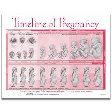 Timeline Of Pregnancy Tear Pad English