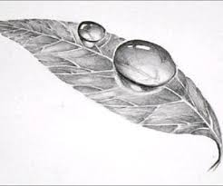 leaf drawing. easy 3d art pencil drawing: how to draw dew drop on leaf: 5 steps (with pictures) leaf drawing
