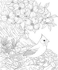 Small Picture Free Printable Coloring PageNorth Carolina State Bird and
