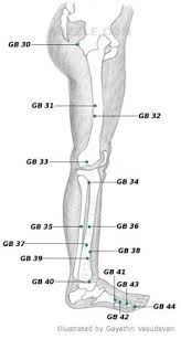 Leg Acupressure Points Chart Acupressure Points Chart Acupressure Treatment