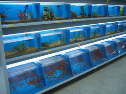 petsmart fish tanks.  Petsmart 31 Petsmart Fish Tanks Extraordinary Fish Tanks O Depict Full Size  With Medium Image On