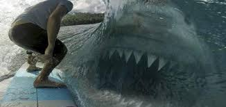 megalodon shark still alive proof 2014. Wonderful 2014 Evidence Of A 50Ton Megalodon Throughout Megalodon Shark Still Alive Proof 2014