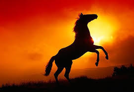 black horse rearing in sunset. Simple Horse Wild Horses Rearing In The Sunset  Google Search Throughout Black Horse Rearing In Sunset A