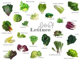 Lettuce Types Chart Know Your Produce Lettuce Varieties Types Of Lettuce
