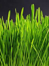 Green Grass Wallpaper - iPhone, Android ...