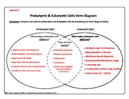 Compare Prokaryotic And Eukaryotic Cells Venn Diagram Prokaryotic Cell Vs Eukaryotic Cell Venn Diagram Magdalene