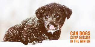 Letting your dogs sleep outside in the cold can increase the risk of hypothermia, a medical condition that may result in extremely low body temperatures. Can Dogs Sleep Outside In The Winter Risk Of Hypothermia Solutions