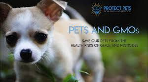 the short film protect our pets from gmos and pesticides was released you won t want to miss the short doentary on the health risks facing our pets and