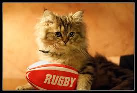 """Résultat de recherche d'images pour """"dessin chat rugbyman"""""""