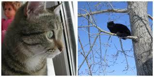 1 марта. И конечно мартовские коты.... | Кот