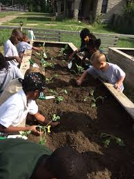 here at kansas city community gardens we take some of that work out for you by researching and pre selecting the plants we will grow and in kansas