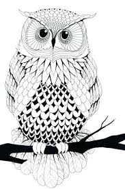 Owl Coloring Pages For Adults Coloring Pages Owl Free Owl Adult