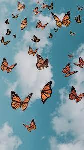 Cute Aesthetic Butterflies Wallpapers ...