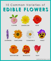 elegant image of flower pictures names flower names in hindi with pictures beautiful flowers name in