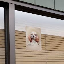 American Cocker Spaniel Dog Breed Home ...