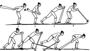 Виды ходов на лыжах для уроков по лыжной подготовке Одновременный двухшажный ход