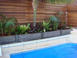 pool plants swimming landscaping ideas with flagstones best palm trees around pools anese maple near friendly