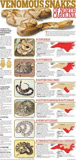 Venomous Snakes Of North Carolina Special Sections