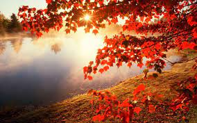 Autumn Wallpaper HD for Android - APK ...