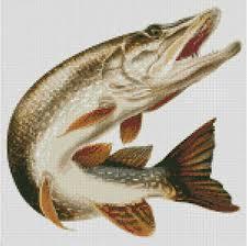 Pike Chart Details About Cross Stitch Chart Pattern Pike Northern Musky Fish Fishing Angling