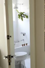 Best Plants To Add Humidity Bathroom Does Your Have Any In It Why ...