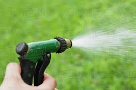 person using spray nozzle on garden hose to water lawn cropped