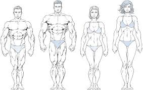 Human Proportions Chart How To Draw People In Proportion