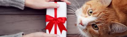 cool gift ideas for pets zoe