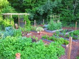 Small Picture Raised Bed Garden Design How To Layout Build Garden Design