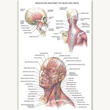 Brain Chart Us 5 32 8 Off Fx1049 Hot Human Science Chart Human Body Anatomy Structure Brain Chart Poster Art Silk Canvas Home Room Wall Printing Decor In